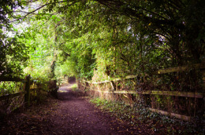 50904086 - woodland path in worsbrough, yorkshire, england